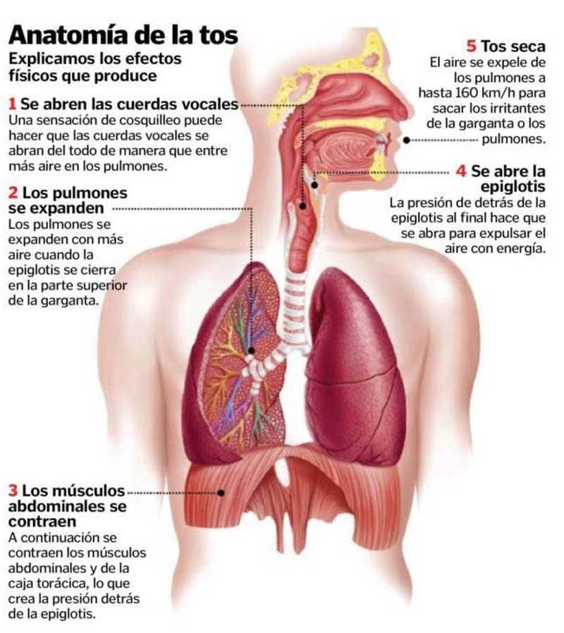 Encantador Lo Que Es La Anatomía Acerca Bosquejo - Anatomía de Las ...