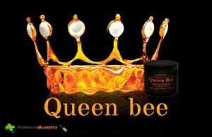 cover-queen-bee